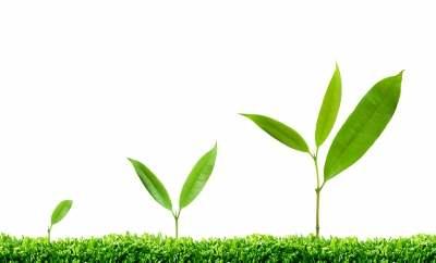 Plant-growth-hormones